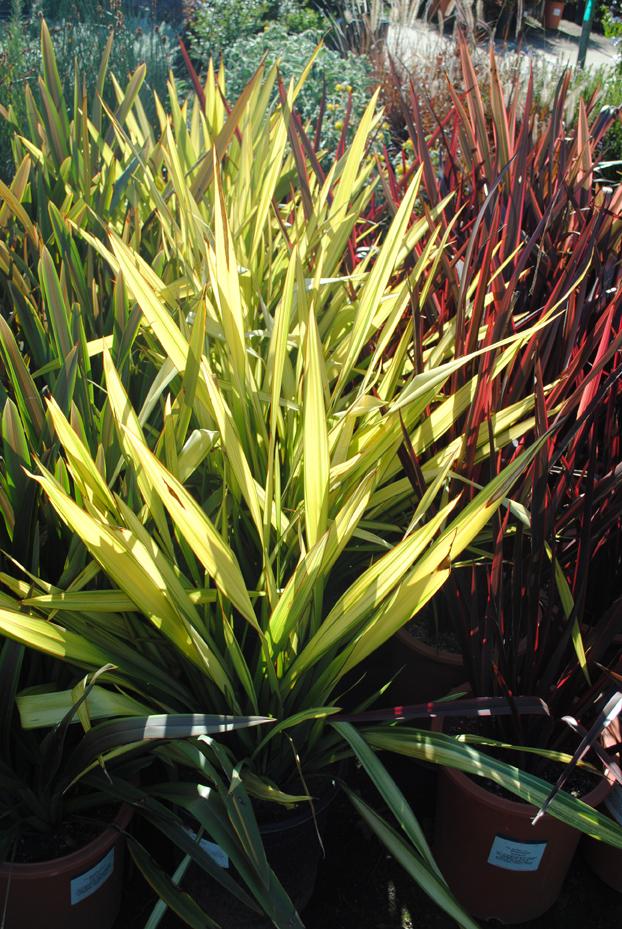 Plants31