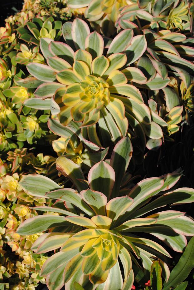 Plants52