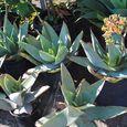 Plants65