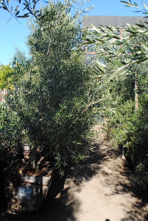 Plants23