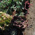 Plants58